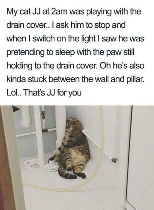 Text - My cat JJ at 2am was playing with the drain cover. I ask him to stop and when I switch on the light I saw he was pretending to sleep with the paw still holding to the drain cover. Oh he's also kinda stuck between the wall and pillar. Lol.. That's JJ for you