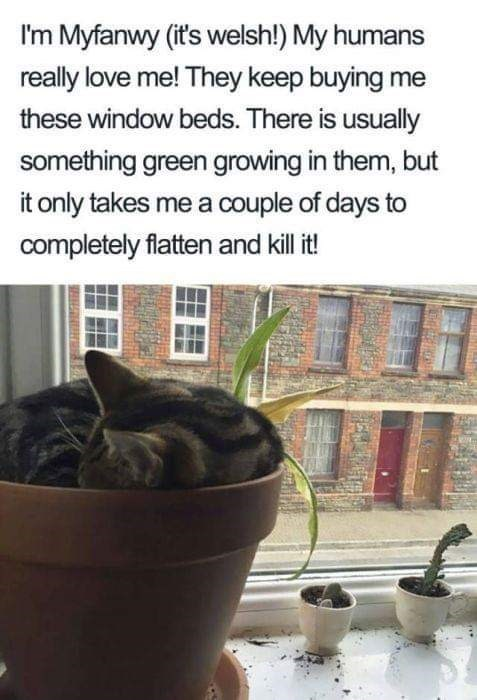 Flowerpot - I'm Myfanwy (it's welsh!) My humans really love me! They keep buying me these window beds. There is usually something green growing in them, but it only takes me a couple of days to completely flatten and kill it!