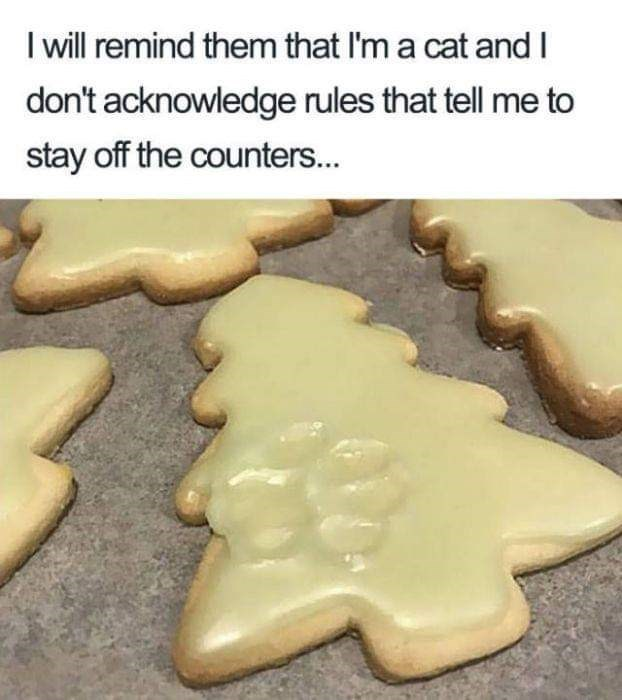 Gingerbread - I will remind them that I'm a cat and don't acknowledge rules that tell me to stay off the counters...