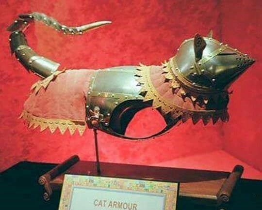 cat armor for real