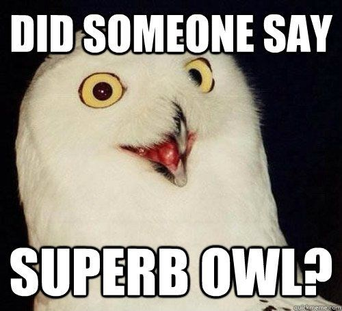 Photo caption - DID SOMEONE SAY SUPERB OWL?