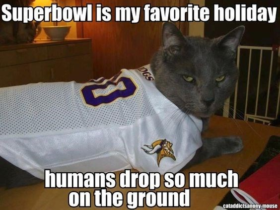 Photo caption - Superbowl is my favorite holiday humans drop sO much on the ground cataddictsanony-mouse DGS