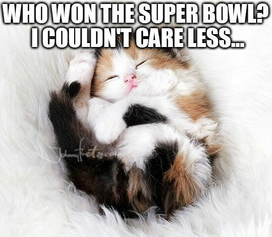 Cat - WHOWON THESUPERBOWL? OCOULDNT CARELESS.