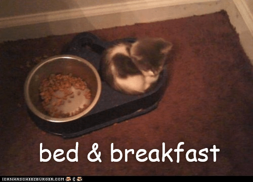 breakfast bed Airbnb cat memes - 9266702848