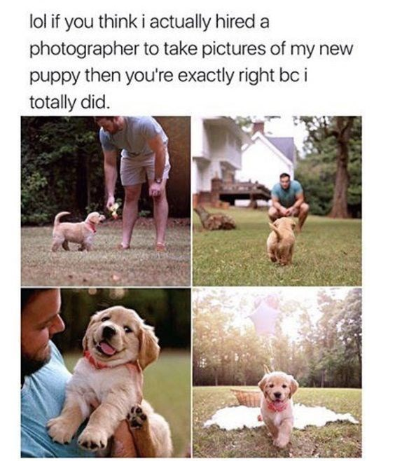 wholesome meme - Dog - lol if you think i actually hired photographer to take pictures of my new puppy then you're exactly right bc i totally did.