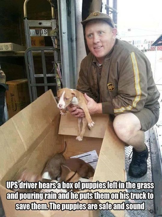 wholesome meme - Canidae - ups Ups Sp UDS UPSdriver hearsabox of puppies leftinthe grass and pouring rainand he puts themonhistruckto savethem The puppiesaresafe and sound A RMARKAY