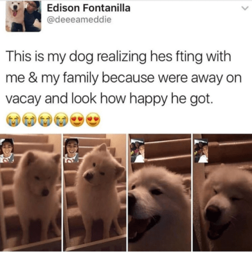 wholesome meme - Vertebrate - Edison Fontanilla @deeeameddie This is my dog realizing hes fting with me & my family because were away on vacay and look how happy he got.