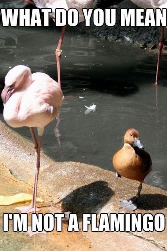 Bird - WHAT DO YOU MEAN IM NOT A FLAMINGO