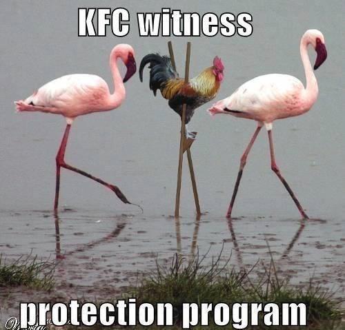 Bird - KFC witness protection program