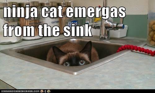 ninja cat meme - 9267065856