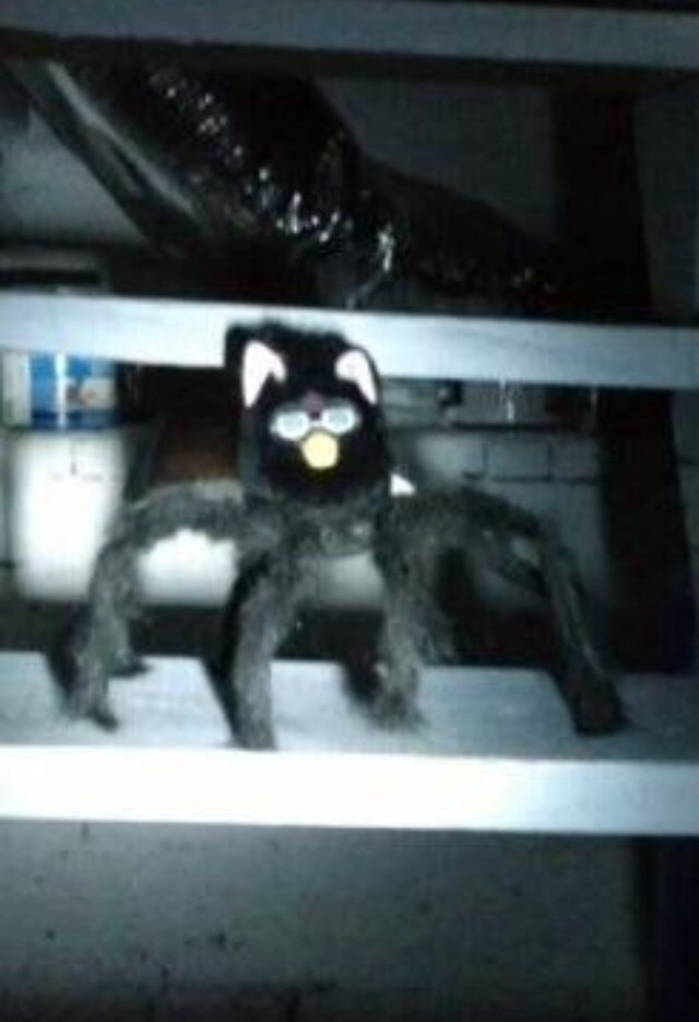 cursed_image - Snapshot of weird spider