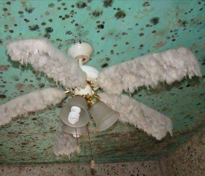 cursed_image - Ceiling fan furry