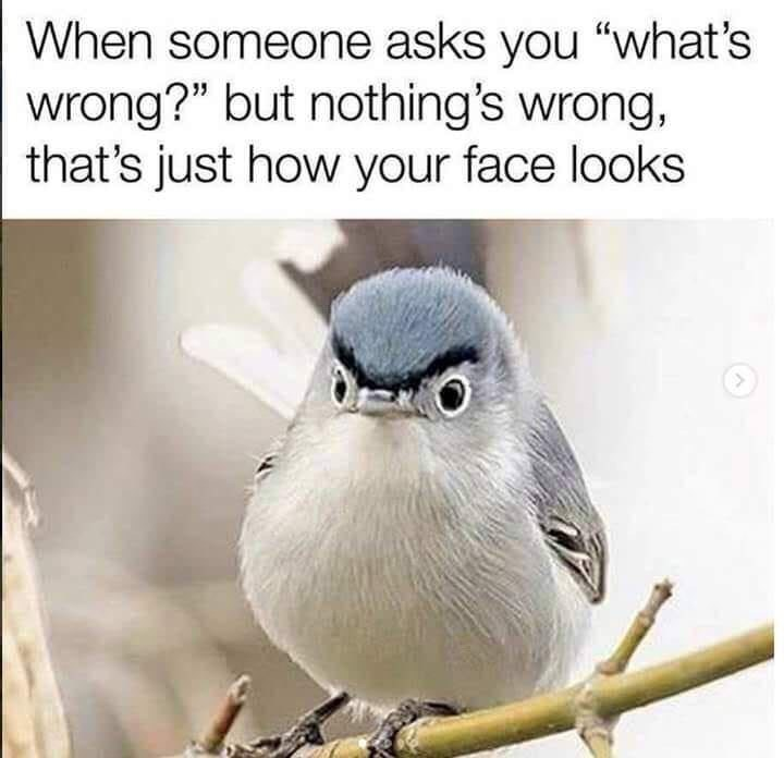 """Caption that reads, """"When someone asks you 'what's wrong?' but nothing's wrong, that's just how your face looks"""" above a pic of a bird that looks angry"""