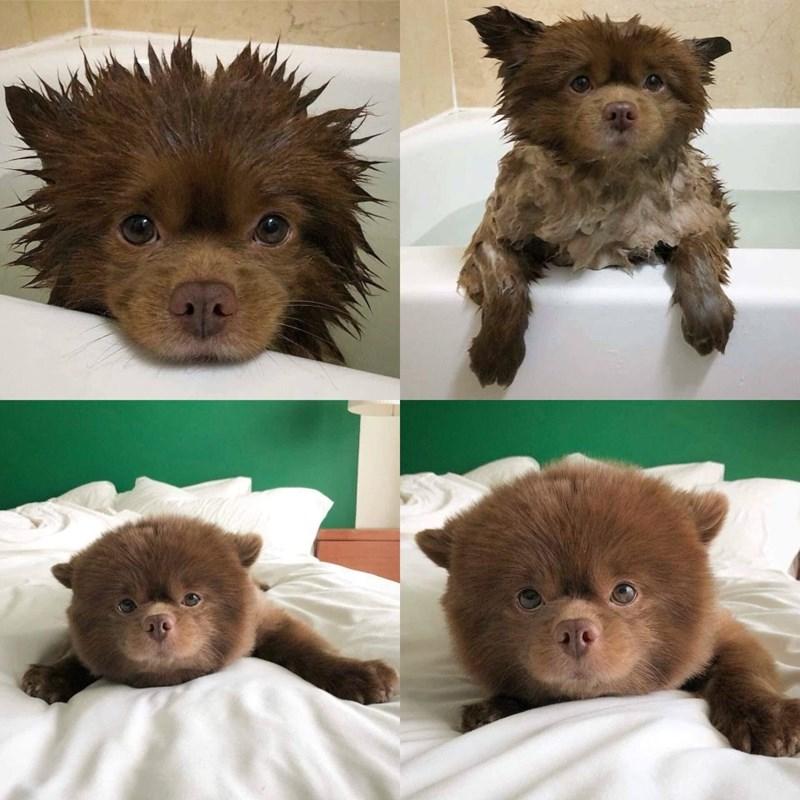 cute animals - Mammal