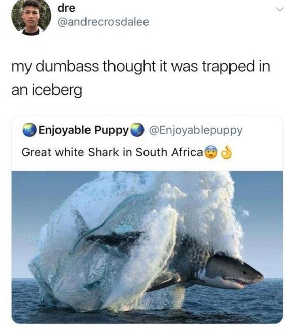 Adaptation - dre @andrecrosdalee my dumbass thought it was trapped in an iceberg Enjoyable Puppy @Enjoyablepuppy Great white Shark in South Africat