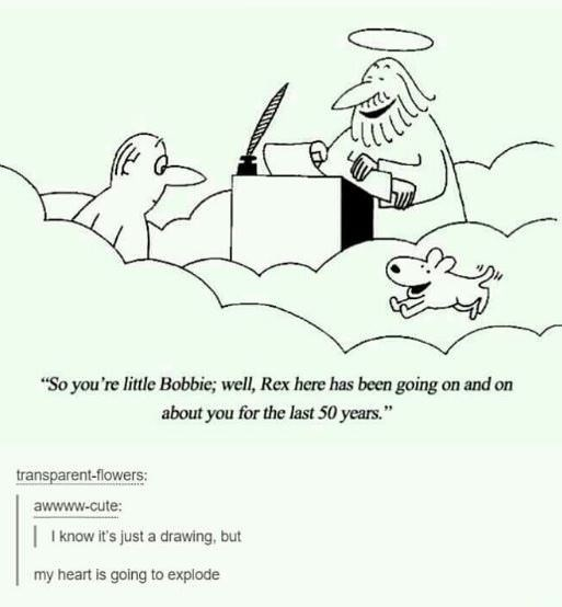 wholesome meme of a man going to heaven and seeing his dog