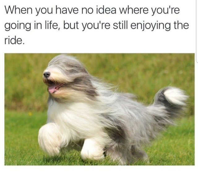 wholesome meme about taking life easily even if you don't know where it's going