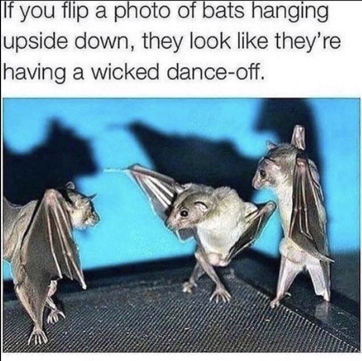 wholesome meme of a upside down photo of bats