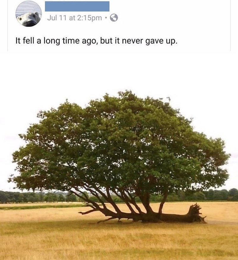 wholesome meme of a tree that fell but still kept growing