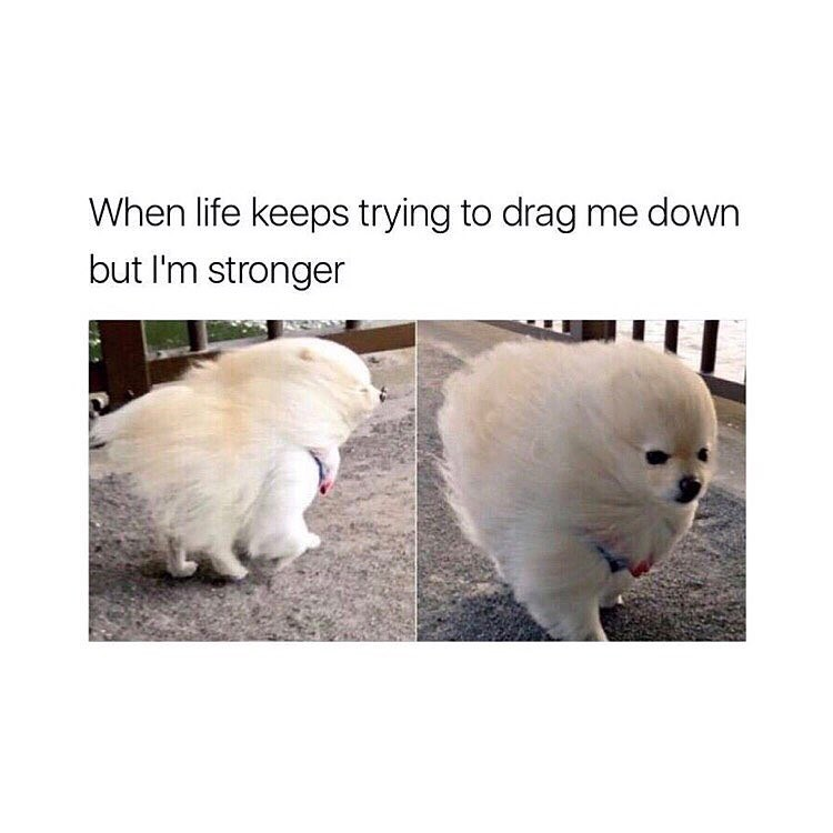 wholesome meme of a dog that is walking against the wind