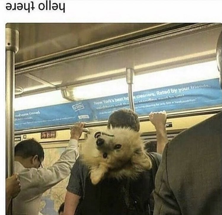 wholesome meme of a dog putting its head upside down while being held by its owner