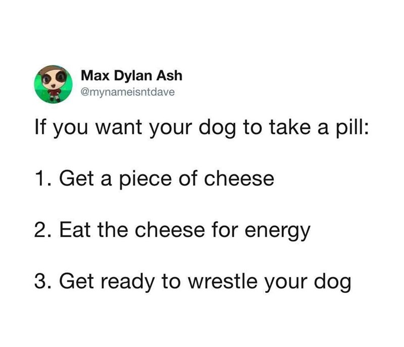 Text - Max Dylan Ash @mynameisntdave If you want your dog to take a pill: 1. Get a piece of cheese 2. Eat the cheese for energy 3. Get ready to wrestle your dog