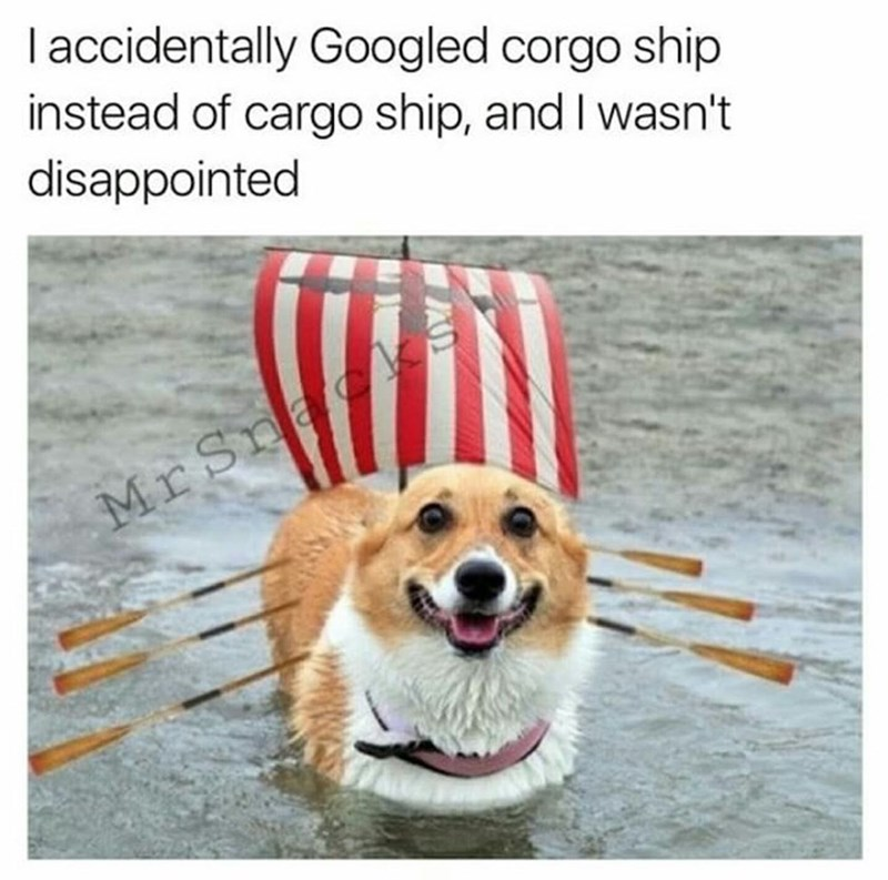 Dog - I accidentally Googled corgo ship instead of cargo ship, and I wasn't disappointed Mr Sna