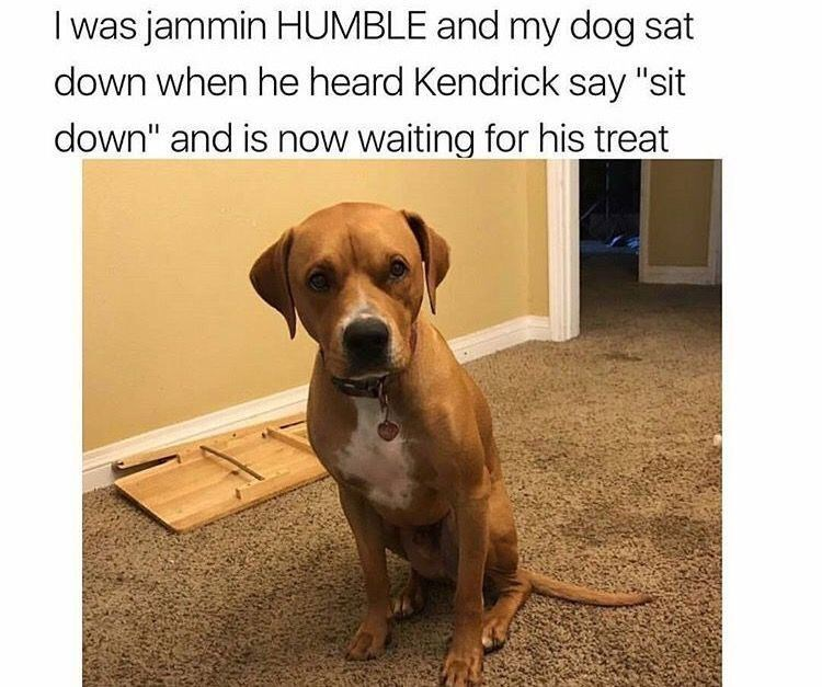 """Dog - I was jammin HUMBLE and my dog sat down when he heard Kendrick say """"sit down"""" and is now waiting for his treat"""