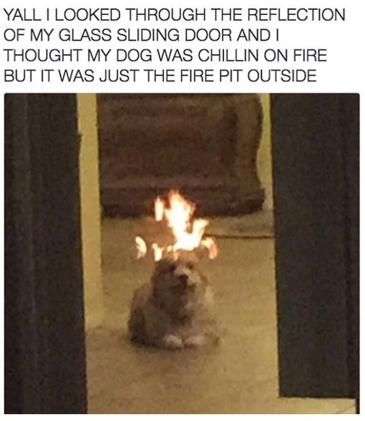 Heat - YALL I LOOKED THROUGH THE REFLECTION OF MY GLASS SLIDING DOOR AND I THOUGHT MY DOG WAS CHILLIN ON FIRE BUT IT WAS JUST THE FIRE PIT OUTSIDE