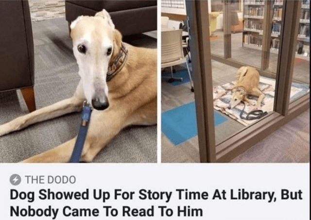 Whippet - THE DODO Dog Showed Up For Story Time At Library, But Nobody Came To Read To Him