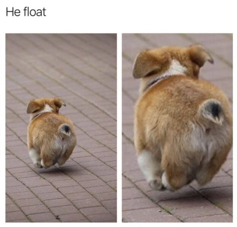 Dog - He float