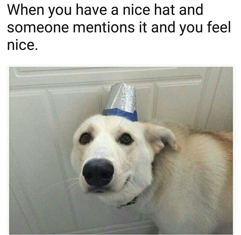Dog - When you have a nice hat and someone mentions it and you feel nice.