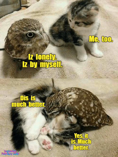 cat meme - Cat - Me, too. Az lonely. Iz by myselt. Dis is much better Yes, it is. Much better bajio6400 February 2019