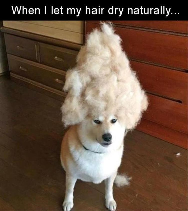 Dog - When I let my hair dry naturally...
