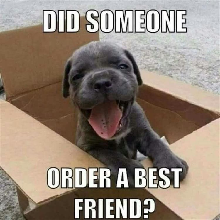 Dog - DID SOMEONE ORDER A BEST FRIEND?