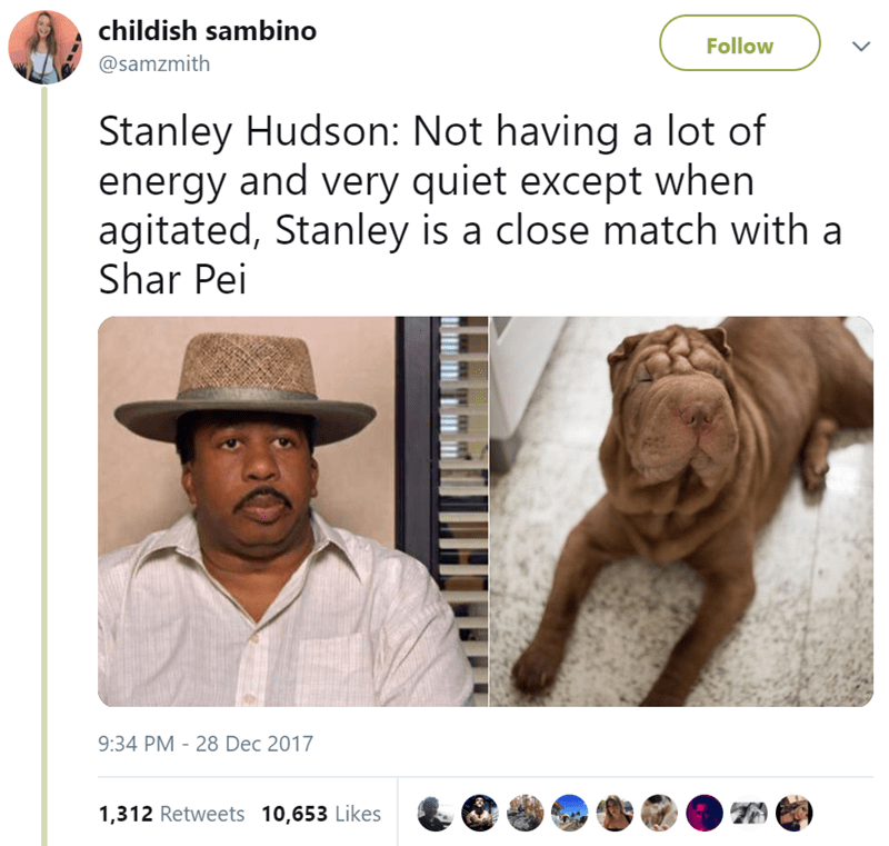 Text - childish sambino Follow @samzmith Stanley Hudson: Not having a lot of energy and very quiet except when agitated, Stanley is a close match with a Shar Pei 9:34 PM - 28 Dec 2017 1,312 Retweets 10,653 Likes