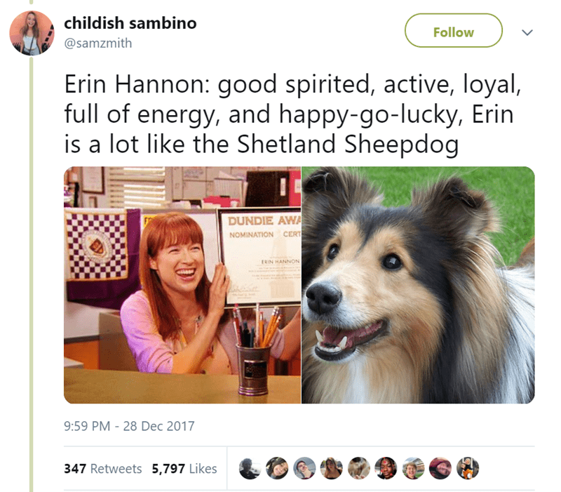 Canidae - childish sambino Follow @samzmith Erin Hannon: good spirited, active, loyal, full of energy, and happy-go-lucky, Erin is a lot like the Shetland Sheepdog DUNDIE AWA CERT NOMINATION ERIN HANNON 9:59 PM 28 Dec 2017 347 Retweets 5,797 Likes