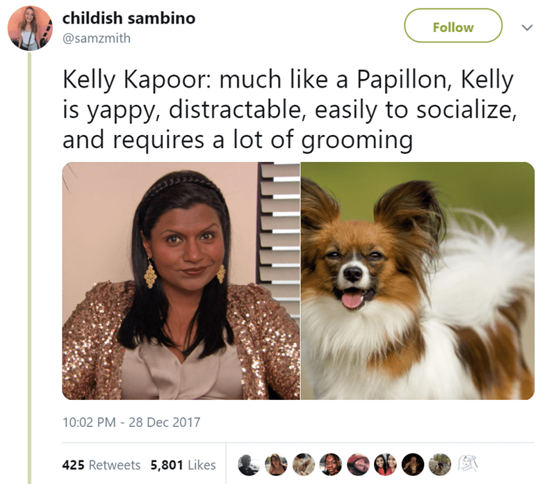 Canidae - childish sambino Follow @samzmith Kelly Kapoor: much like a Papillon, Kelly is yappy, distractable, easily to socialize, and requires a lot of grooming 10:02 PM - 28 Dec 2017 425 Retweets 5,801 Likes