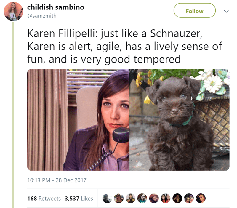 Canidae - childish sambino Follow @samzmith Karen Fillipelli: just like a Schnauzer, Karen is alert, agile, has a lively sense of fun, and is very good tempered 10:13 PM - 28 Dec 2017 168 Retweets 3,537 Likes