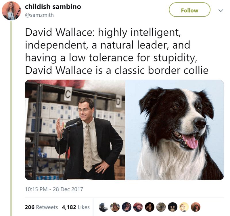 Canidae - childish sambino Follow @samzmith David Wallace: highly intelligent, independent, a natural leader, and having a low tolerance for stupidity, David Wallace is a classic border collie C 10:15 PM 28 Dec 2017 206 Retweets 4,182 Likes