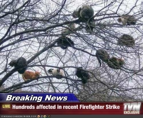 Tree - Breaking News LIVE Hundreds affected in recent Firefighter Strike EXCLUSIVE CANHASCHEE2EURGER cOM