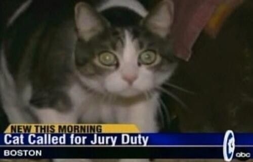 Cat - NEW THIS MORNING Cat Called for Jury Duty BOSTON abc