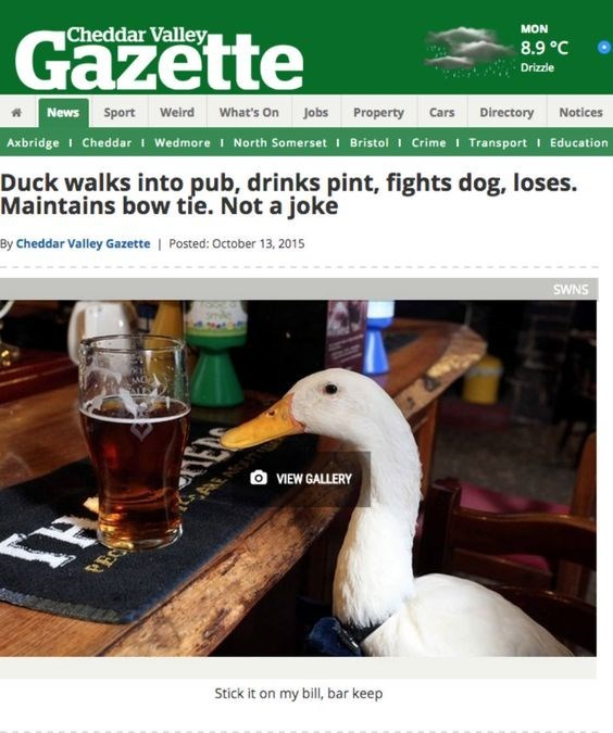 Duck - Cheddar Valley Gazette MON 8.9 °C Drizzle News Sport weird What's On Jobs Property Cars Directory Notices Axbridge I Cheddar I Wedmore I North Somerset I Bristol Crime I Transport I Education Duck walks into pub, drinks pint, fights dog, loses Maintains bow tie. Not a joke By Cheddar Valley Gazette | Posted: October 13, 2015 SWNS O VIEW GALLERY PE Stick it on my bill, bar keep