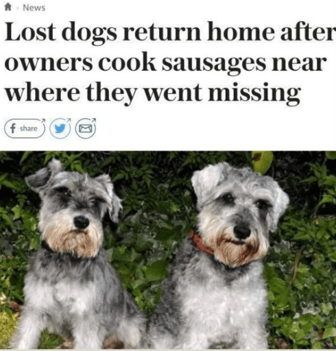 Dog - News Lost dogs return home after owners cook sausages near where they went missing f share