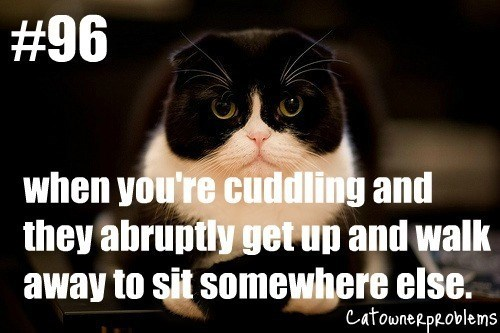 black and white cat looking cute when you're cuddling and they abruptly get up and walk away to sit somewhere else