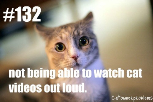 grey cat not being able to watch cat videos out loud