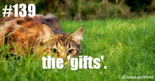 cat crouching in grass the gifts