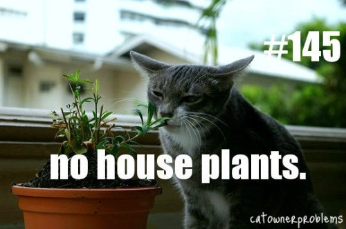 grey cat smelling house plant inside window no house plants