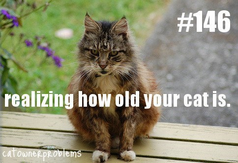 fluffy tabby cat sitting on bench realizing how old your cat is