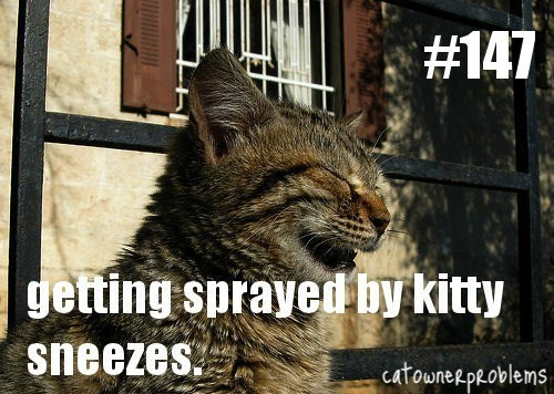 tabby cat sneezing getting sprayed by kitty sneezes